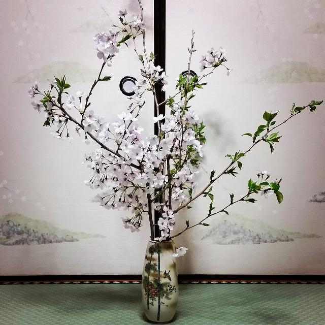会社前桜を生ける